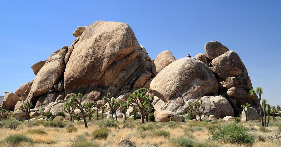 Pierre Leclerc. Jumbo Rocks In Joshua Tree National Park [online]. źródło: http://fineartamerica.com/featured/jumbo-rocks-in-joshua-tree-national-park-pierre-leclerc.html