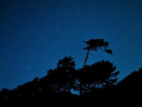 http://img06.deviantart.net/35ed/i/2012/192/b/e/night_time_silhouette_by_canadashorty-d56v632.jpg